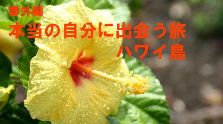cafeblo_hawaii.jpg